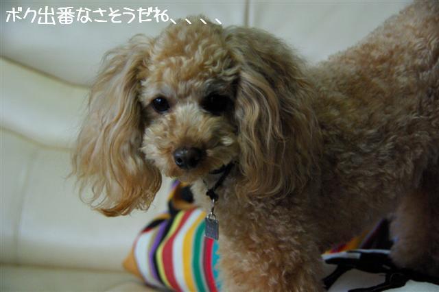 2009.2.4イブティサム里帰り 076 (Small)