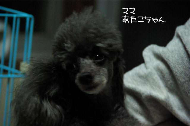 2009.2.4イブティサム里帰り 138 (Small)
