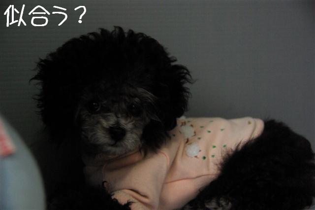 2008.6.7ロッタ初・洋服 015 (Small)