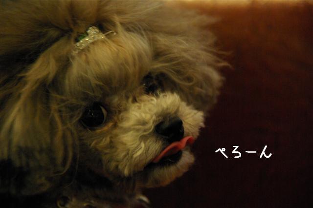 2009.2.8二子デプト 006 (Small)