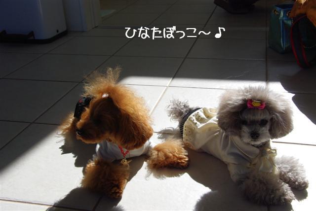 2009.2.17第1回ちょんまげ会 341 (Small)