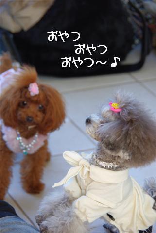 2009.2.17第1回ちょんまげ会 298 (Small)