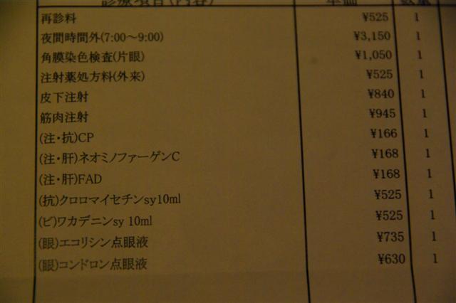 2009.2.28ロッタ角膜傷 042 (Small)