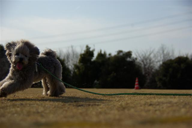 2009.3.12運動公園&ばじカフェ 226 (Small)