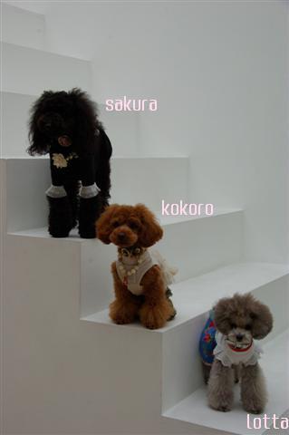 2009.3.14スタジオ 727 (Small)