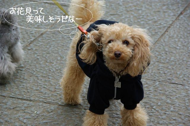 2009.3.27上野公園花見 045 (Small)