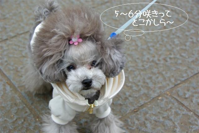 2009.3.27上野公園花見 052 (Small)
