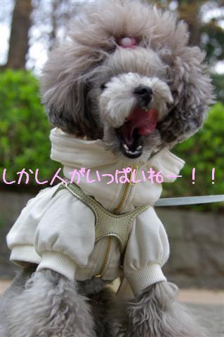 2009.3.27上野公園花見 057 (Small)