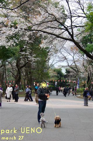 2009.3.27上野公園花見 079 (Small)
