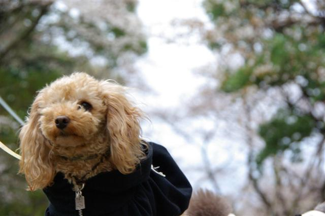 2009.3.27上野公園花見 094 (Small)