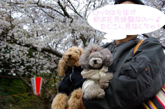2009.3.27上野公園花見 133 (Small)