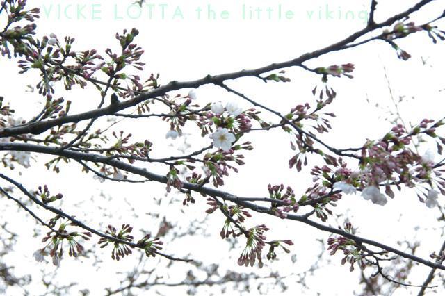 2009.3.27上野公園花見 142 (Small)