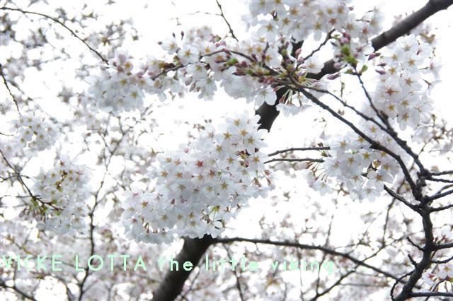 2009.3.27上野公園花見 143 (Small)