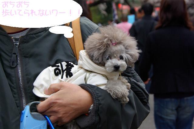 2009.3.27上野公園花見 156 (Small)