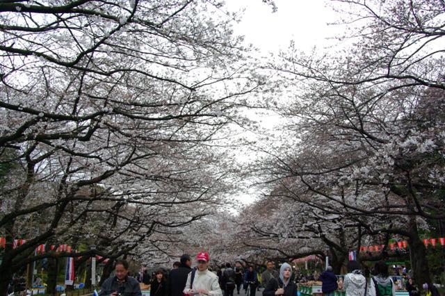 2009.3.27上野公園花見 165 (Small)