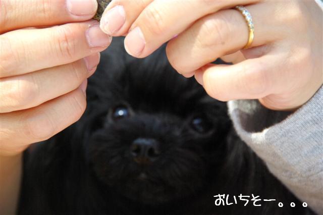 2009.3.19レッスンZEBRA 355 (Small)