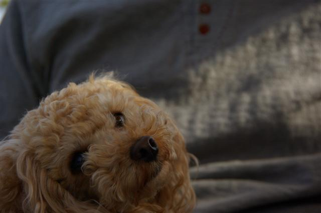 2009.4月5日7日ランチ・弁天桜 037 (Small)