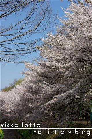 2009.4月5日7日ランチ・弁天桜 133 (Small)