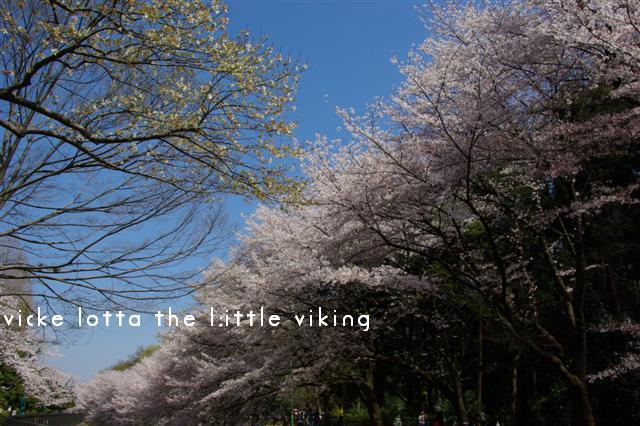 2009.4月5日7日ランチ・弁天桜 127 (Small)