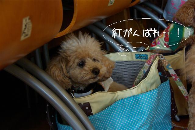 2009.4.16しつけ教室 011 (Small)