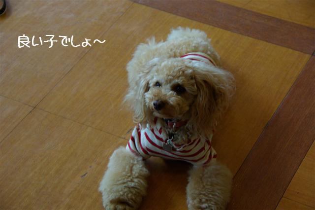 2009.4.16しつけ教室 047 (Small)