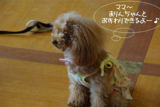 2009.4.16しつけ教室 041 (Small)