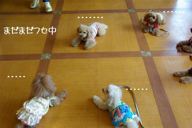 2009.4.16しつけ教室 051 (Small)