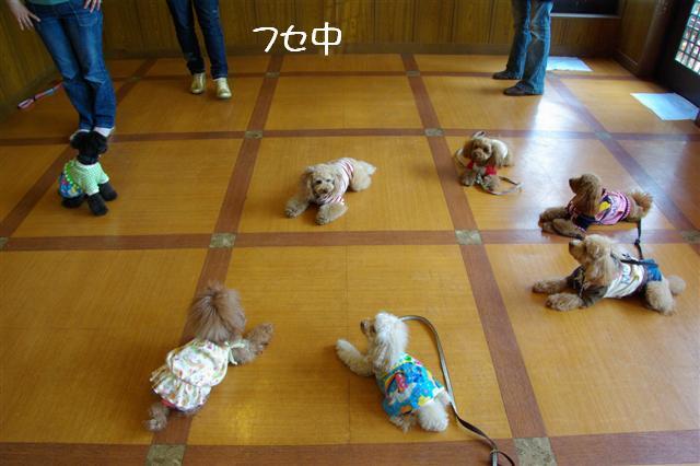 2009.4.16しつけ教室 050 (Small)