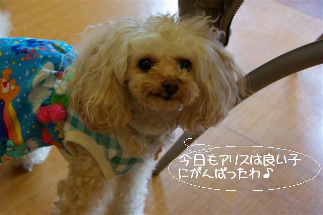 2009.4.16しつけ教室 066 (Small)