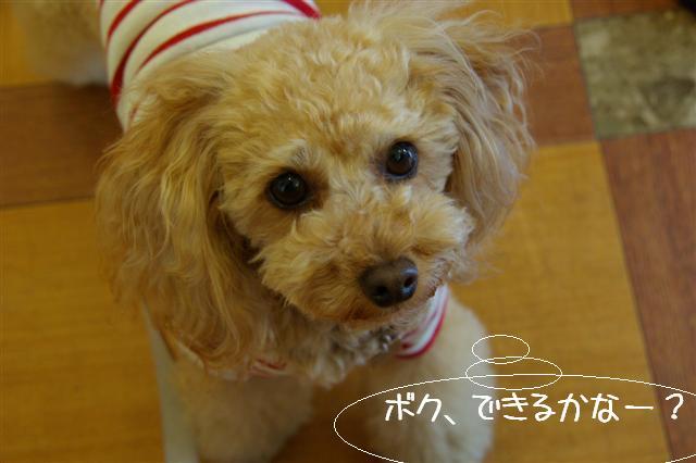 2009.4.16しつけ教室 064 (Small)
