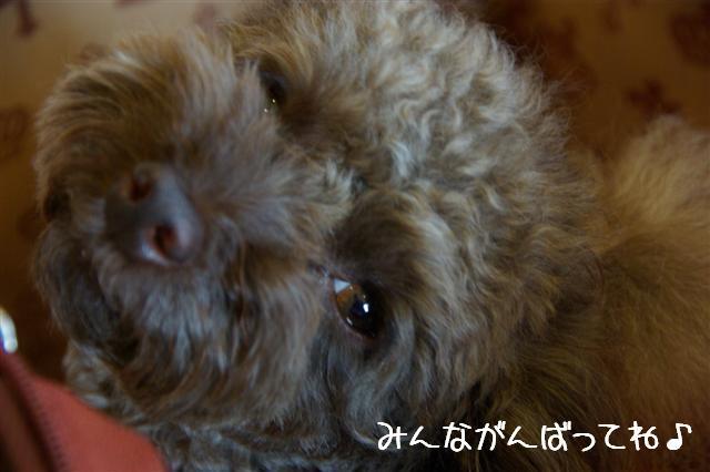 2009.4.16しつけ教室 085 (Small)