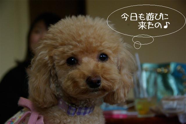 2009.4.16しつけ教室 159 (Small)