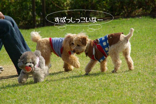 2009.4.19あいな公園 045 (Small)