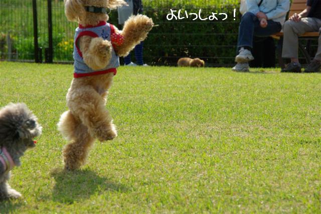 2009.4.19あいな公園 072 (Small)