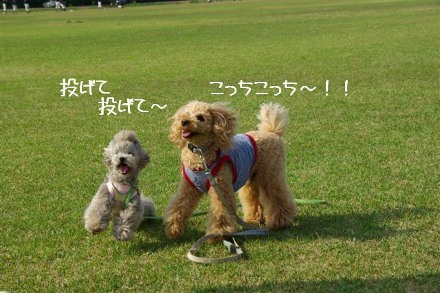 2009.4.19あいな公園 150 (Small)