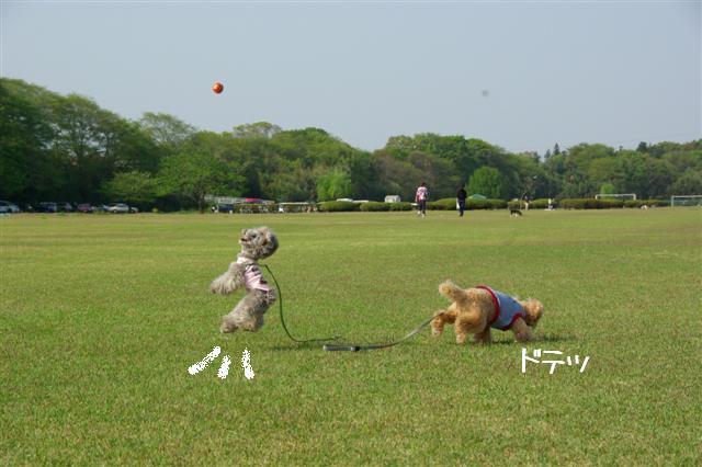2009.4.19あいな公園 198 (Small)