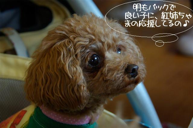 2009.4.16しつけ教室 162 (Small)