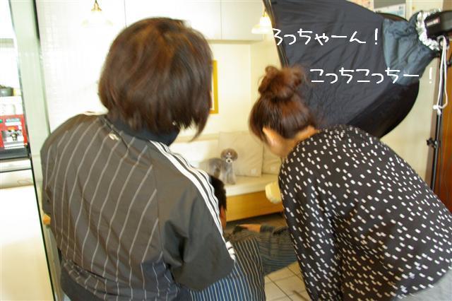 2009.3.24プードルファミリー撮影 081 (Small)
