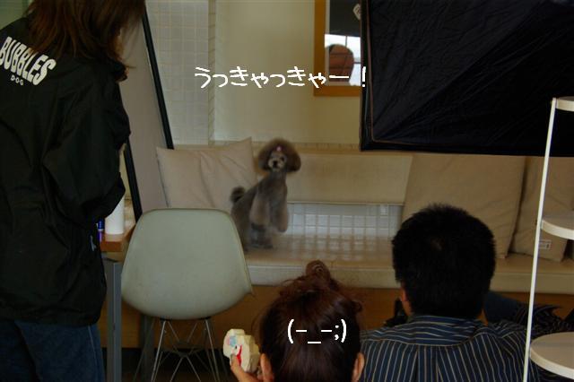 2009.3.24プードルファミリー撮影 091 (Small)