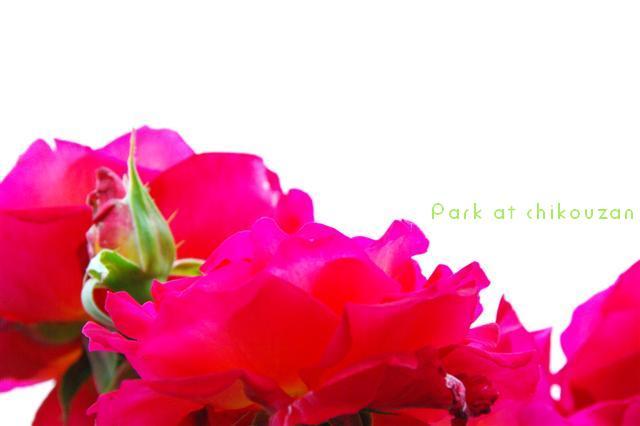 2009.5.16puerto21しつけ教室 277 (Small)
