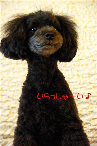 2009.5.29グフ家たこ焼き 175 (Small)