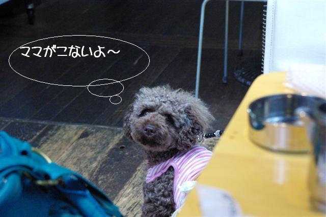 2009.6トトオズコタレオ表参道 032 (Small)
