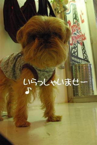 2009.6トトオズコタレオ表参道 178 (Small)