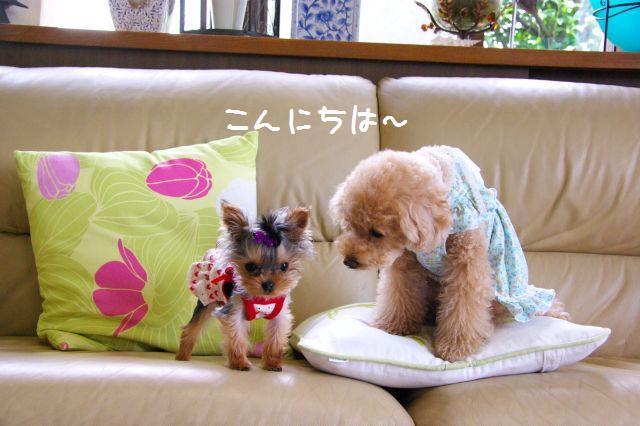 (small)2009.6.12ユキヨ邸 014
