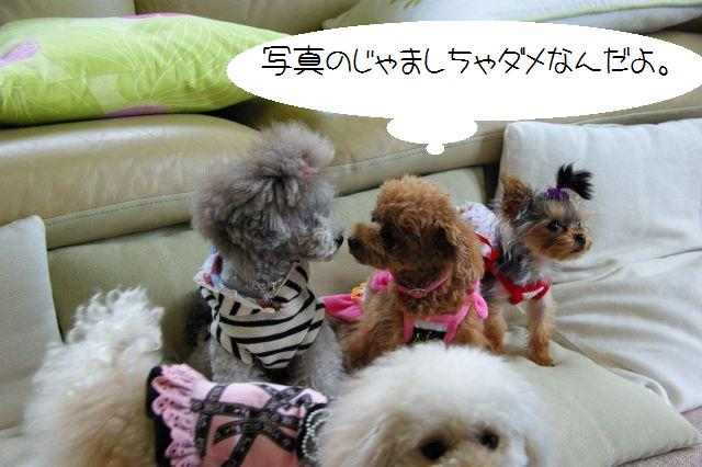 (small)2009.6.12ユキヨ邸 188