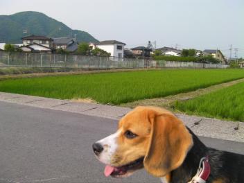 ぴす太in新潟 001