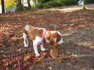 落ち葉の公園を散歩したよ1