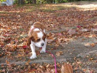 落ち葉の公園を散歩したよ2
