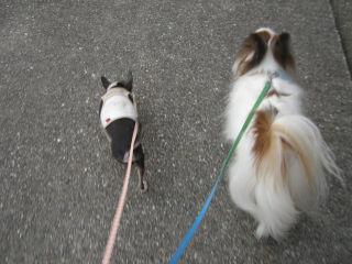 一緒に歩いてみる