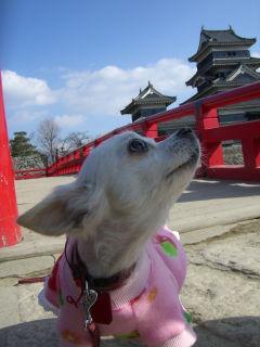 クルミ松本城にて1